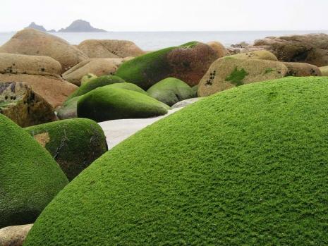 Green Rock And Island