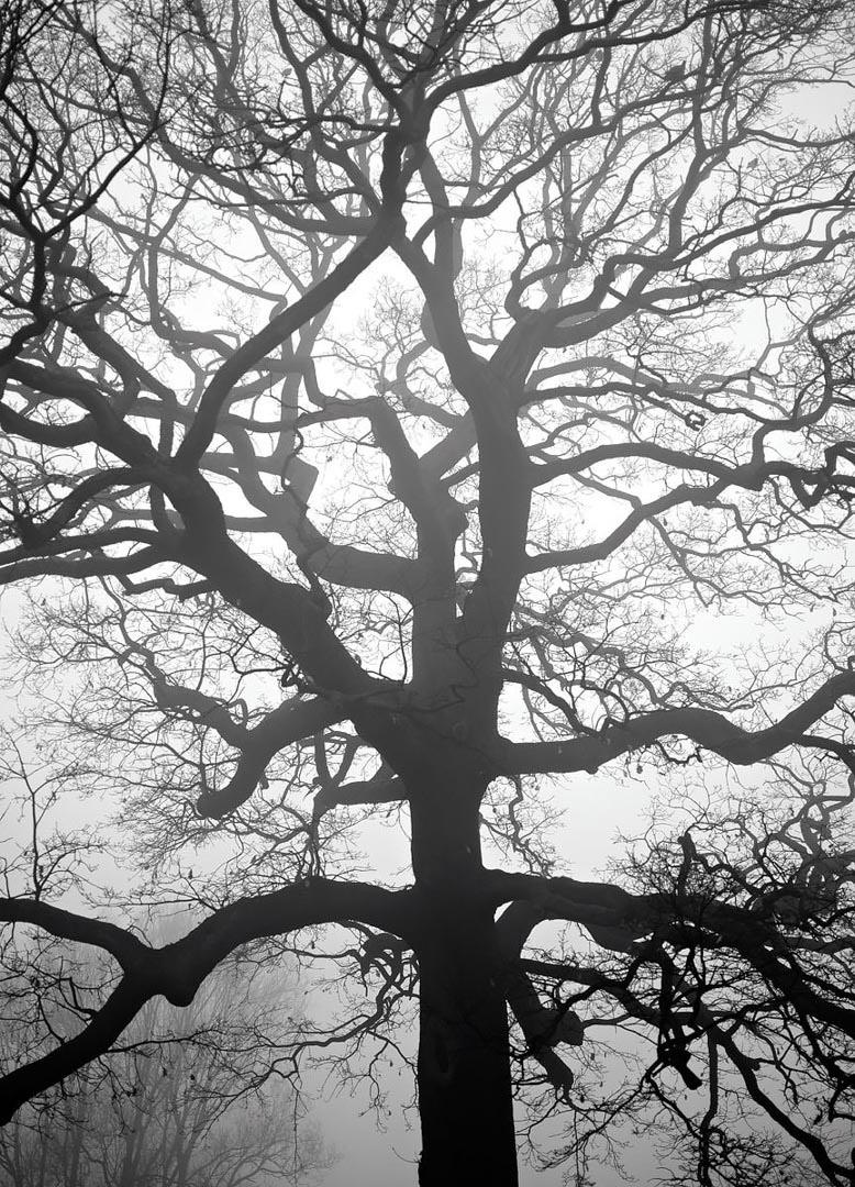 Greenwich Park Fog