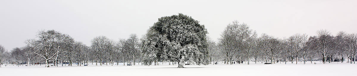 Greenwich Park In The Snow II