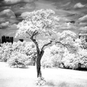 Greenwich Park - Infra Red II