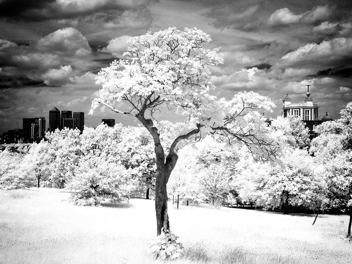 Greenwich Park - Infra Red II