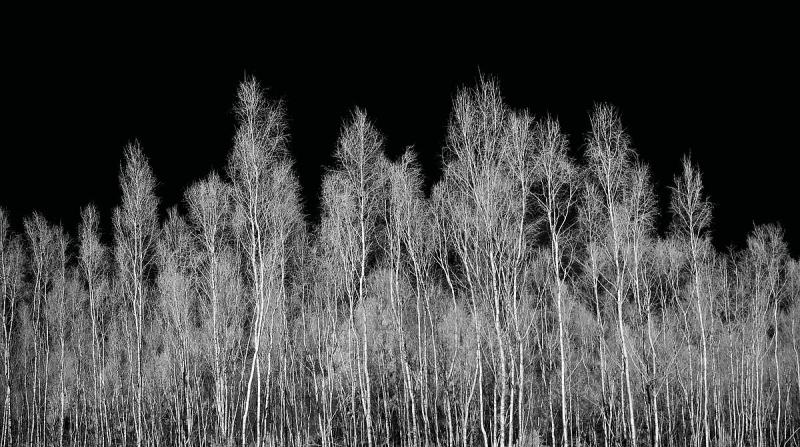Kent Trees VI