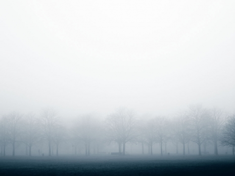 Misty Trees Greenwich