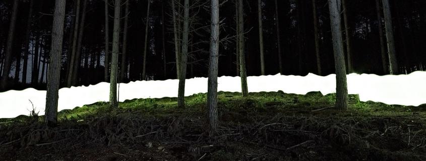 New Forest V