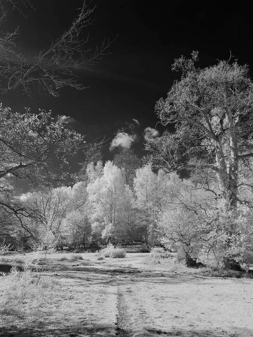 New Forest VII