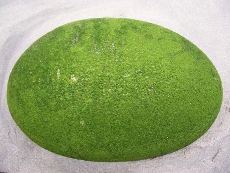 Sole Green Rock