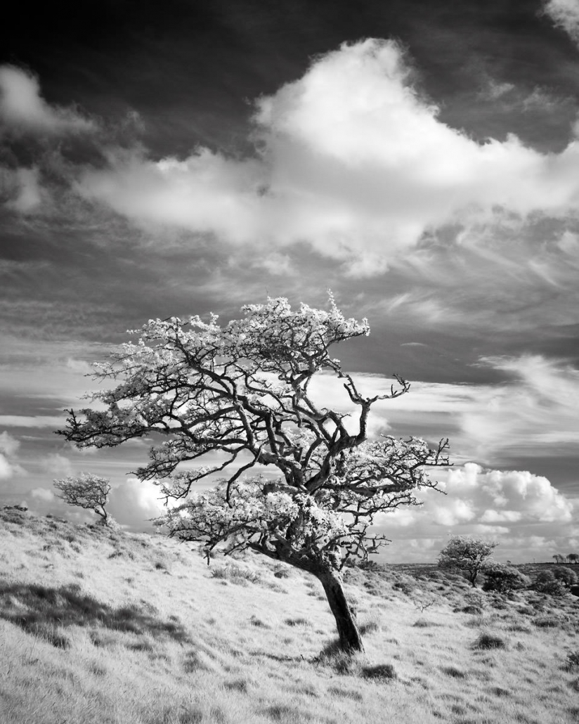 Infra Red Trees Devon